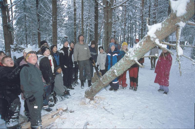 Tømmerhogst på gammelmåten (Foto/Photo)