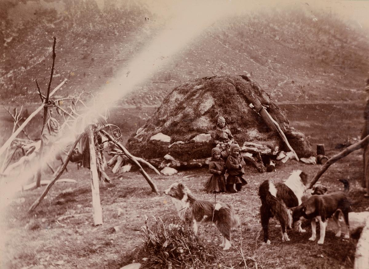 En samekvinne, to barn og fire hunder foran gammen på sameplassen på Lyngseidet i Troms.