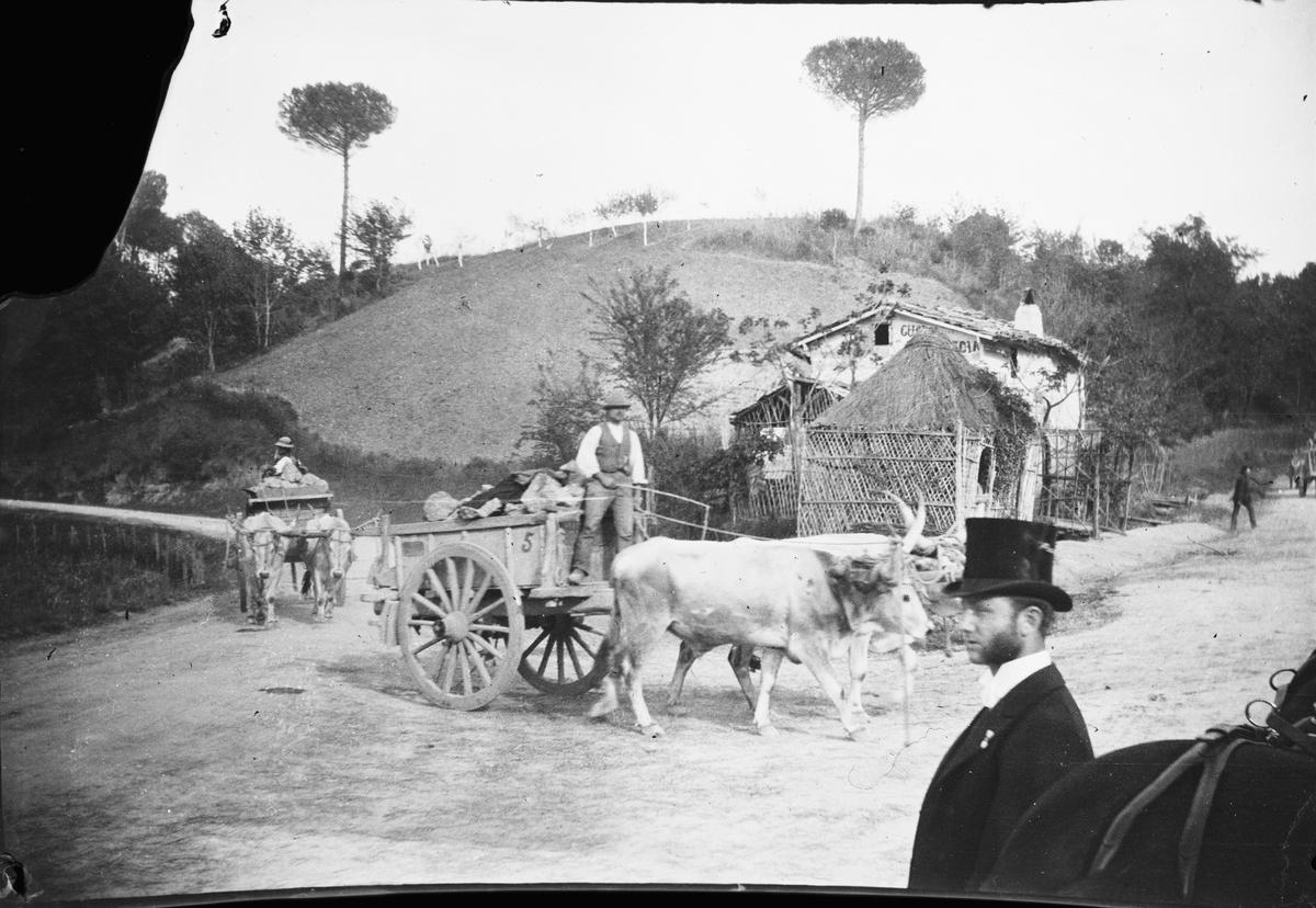 Drottning Victoria bilder. Vagn med last dragen av oxar. Framför en man i höghatt.