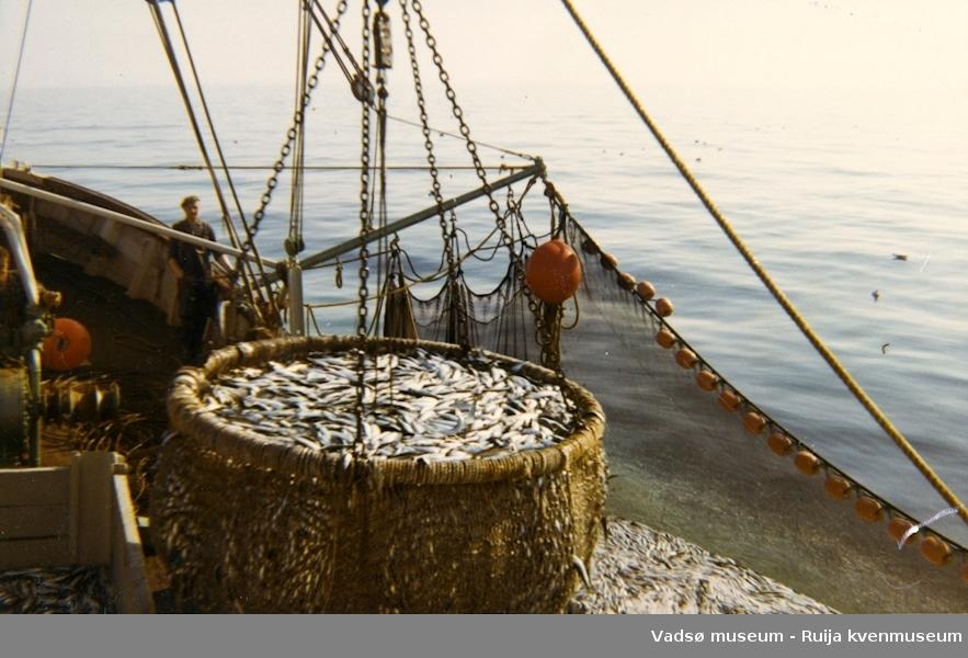 Sildefiske på Varangerfjorden med M/S Egil. Bjarne Krogh står ved vantet. Det håves inn 1200 kg sild.