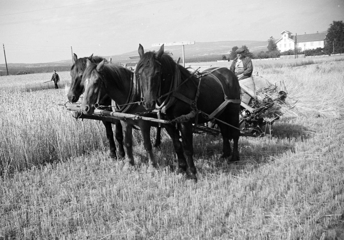 Imerslund, store, Vang H. Skuronn, hester i trespann, hesteredskap, ukjent.