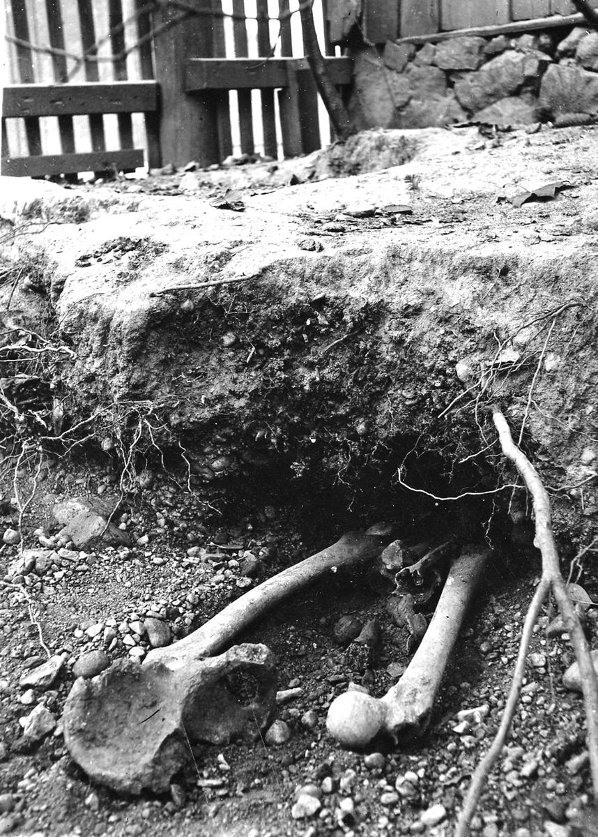 Benknotor framgrävda vid Mullgatan