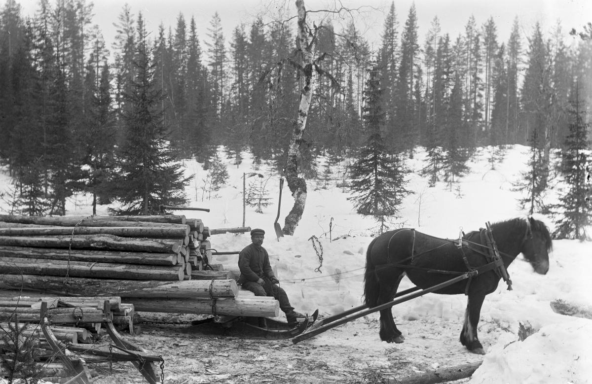 Timmerkörning med häst. Anders Persson, Stugubacken och hästen Bella