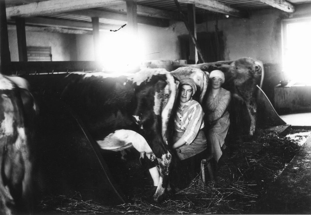 Pigorna Beda Lundgren och Agnes Andersson mjölkar korna i Nils-Nils. Foto 1917-1918.