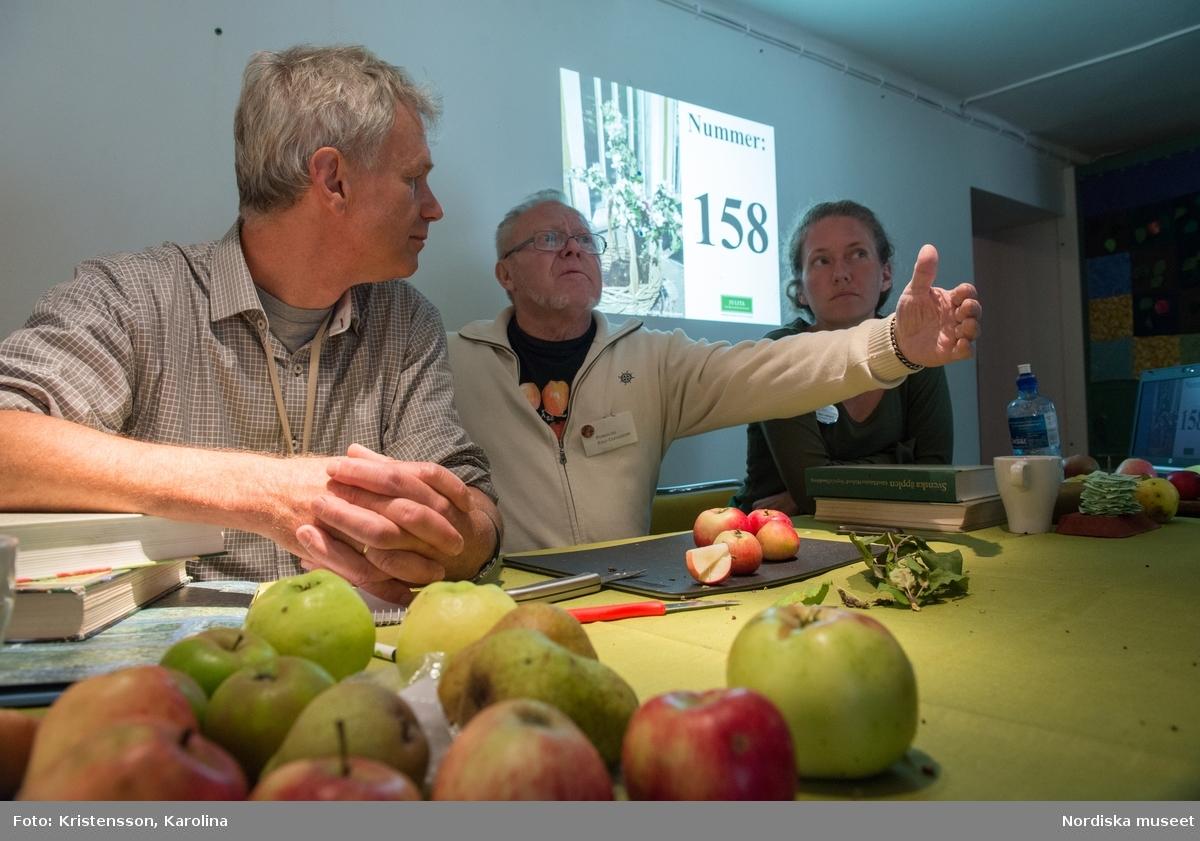 Äppeldagarna Julita 2015, Äpplen, marknad, artbestämning, äppelutställning