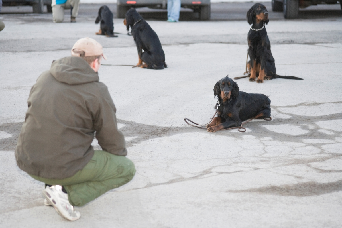 Dressurkurs for hund. Hund venter på kommando.