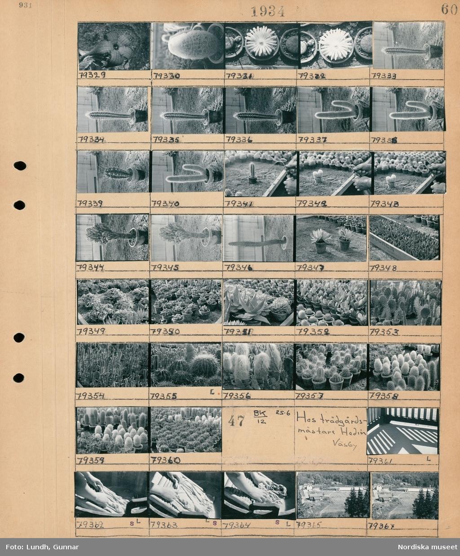 Motiv: Hos trädgårdsmästare Hedin, Väsby; Kaktusar i krukor.  Motiv: Hos trädgårdsmästare Hedin, Väsby: Detaljbild av händer som tvättar på en tvättbräda, landskapsvy med bebyggelse.