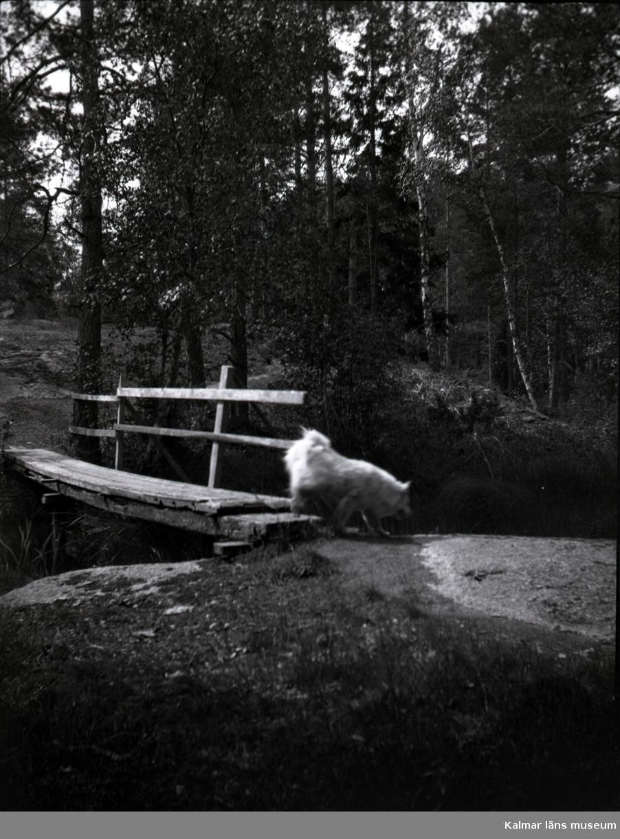 En hund framför en bro i närheten av Tuna gård.