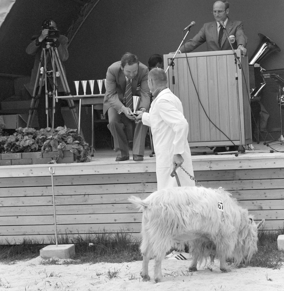 Norske Melkeprodusenters Landsforbund, NML 100 år 1881-1981. Jubileumsutstilling,visningsring, kavalkade over norsk husdyrhold, geit, Domkirkeodden, Hamar.