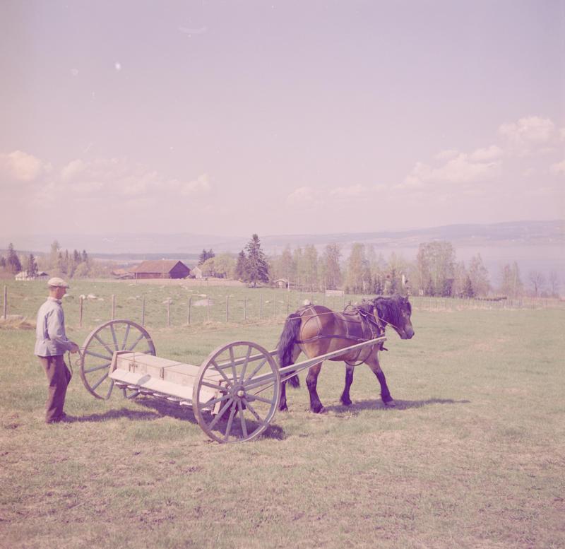 Mann med hest i arbeid 1958-59