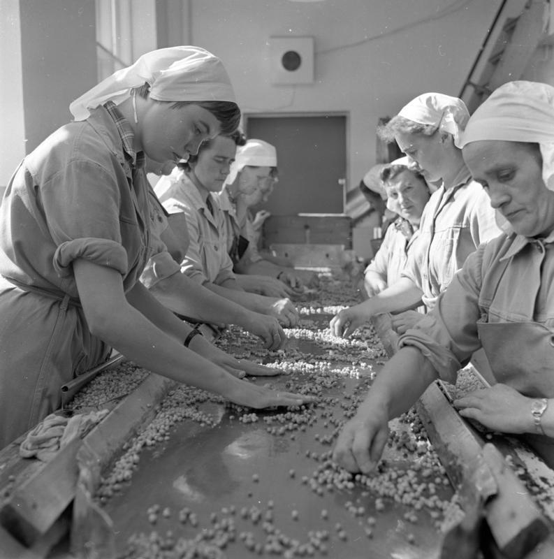 Nora Fabrikker. Kvinner ved samlebånd. Brumunddal 1958.