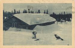 vinterbilete med snø, tømmerhytte, valp og skjor og granskog