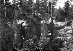 Tre gutter sjekker fuglesnarer i skogen i Moss. Fra venstre