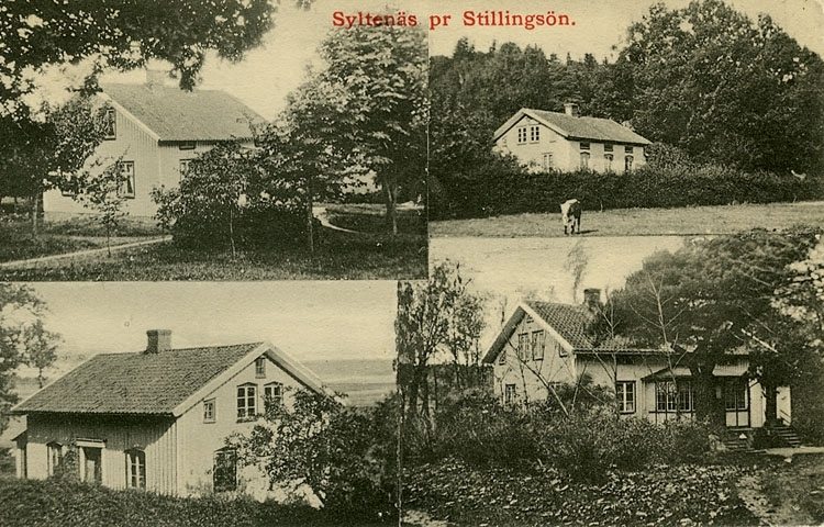 """Enligt Bengt Lundins noteringar: """"Syltenäs pr Stillingsön. 4-bild""""."""