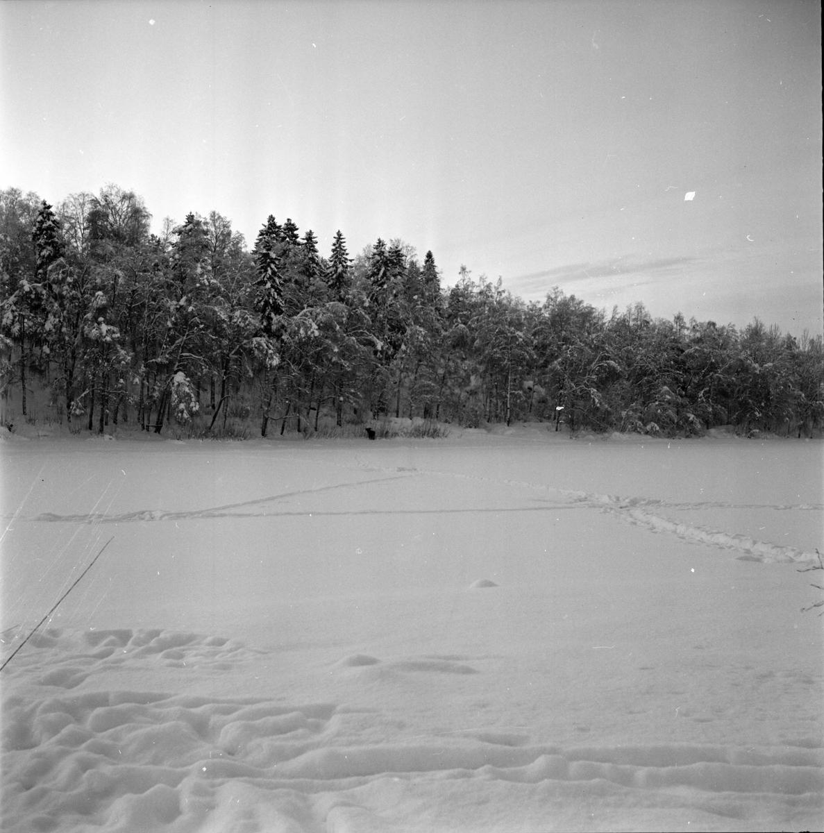 Bollnäs, Älg på Tjärn, Bilder från Höglundabron, 12 Januari 1967