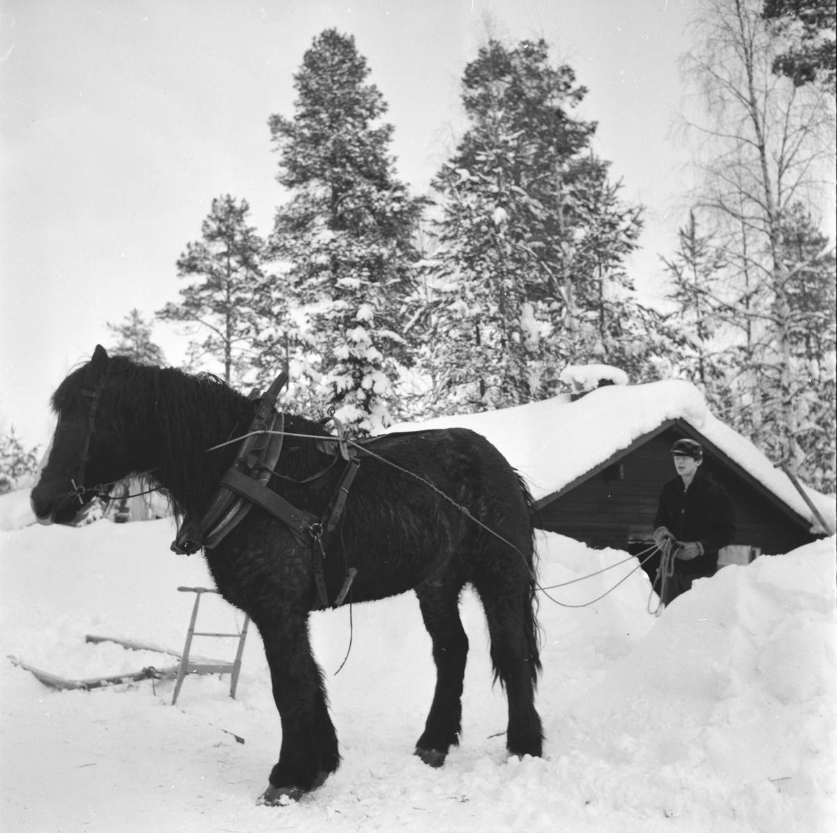 Söderlund Göte, Skogskörning vid Grannäsvägen, 9 Febr 1966