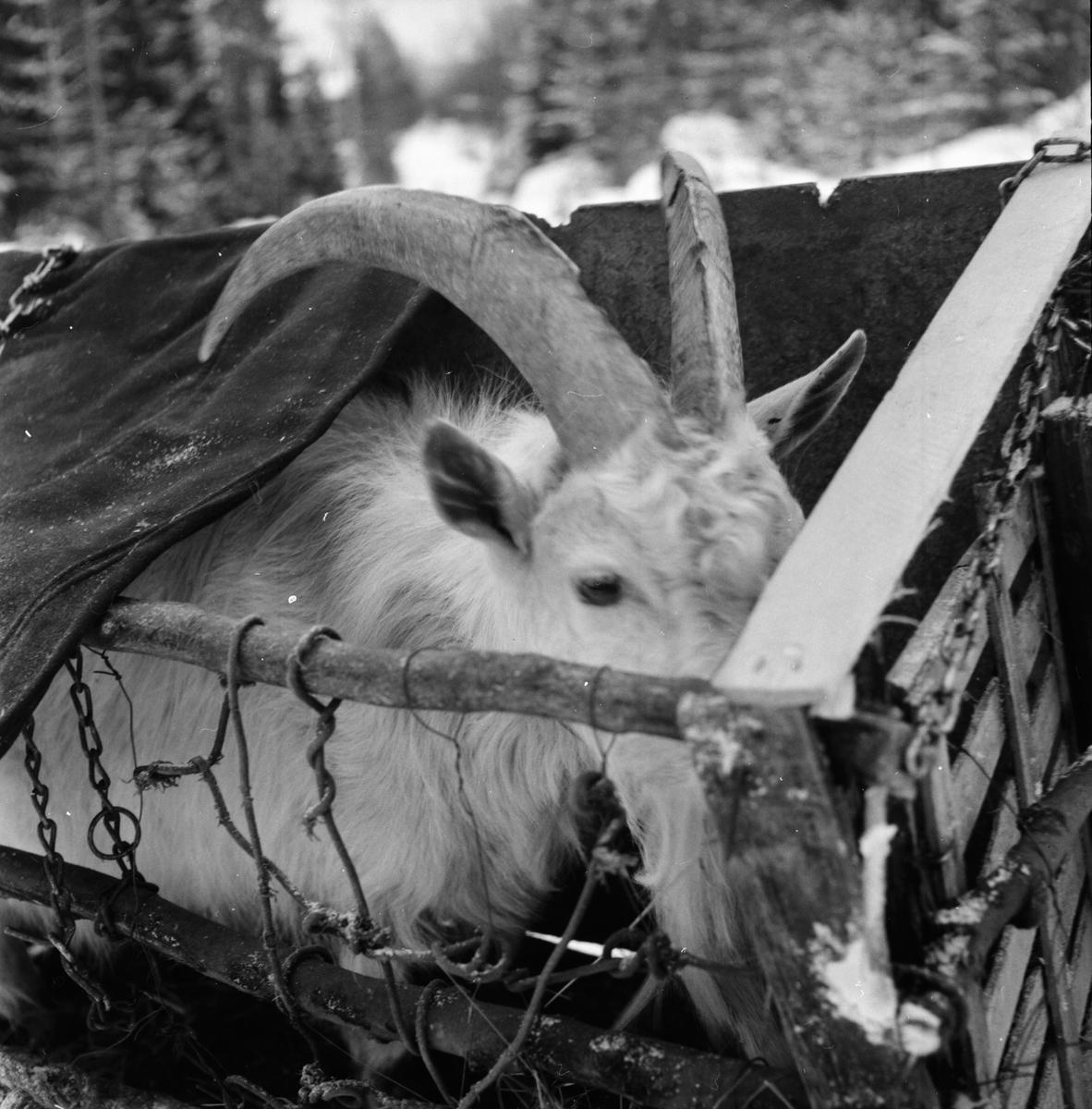 Nordkvist,Karl-Rune,författare i Mörtsjö 28 jan 1960
