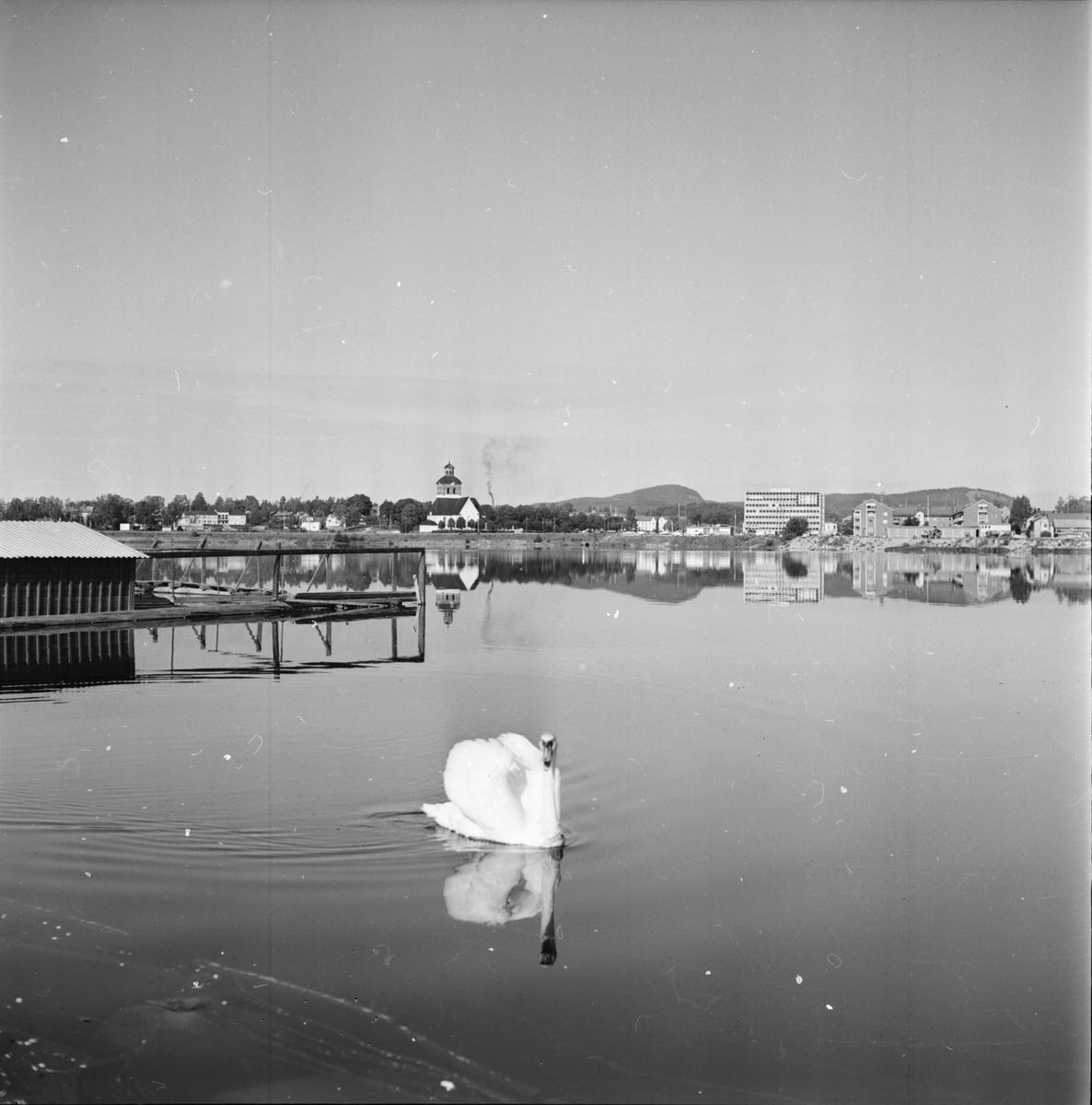 Bollnäs, Vågens fåglar, Aug. 1970