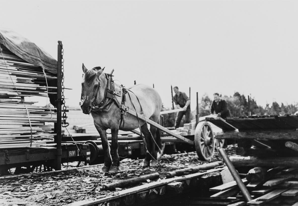 Lasting av plank på jernbanevogn på Buåa stasjon på Vestmarkalinjen, eller Paradisbanen som den også ble kalt, siste driftsdag før nedleggelsen i juli 1965.