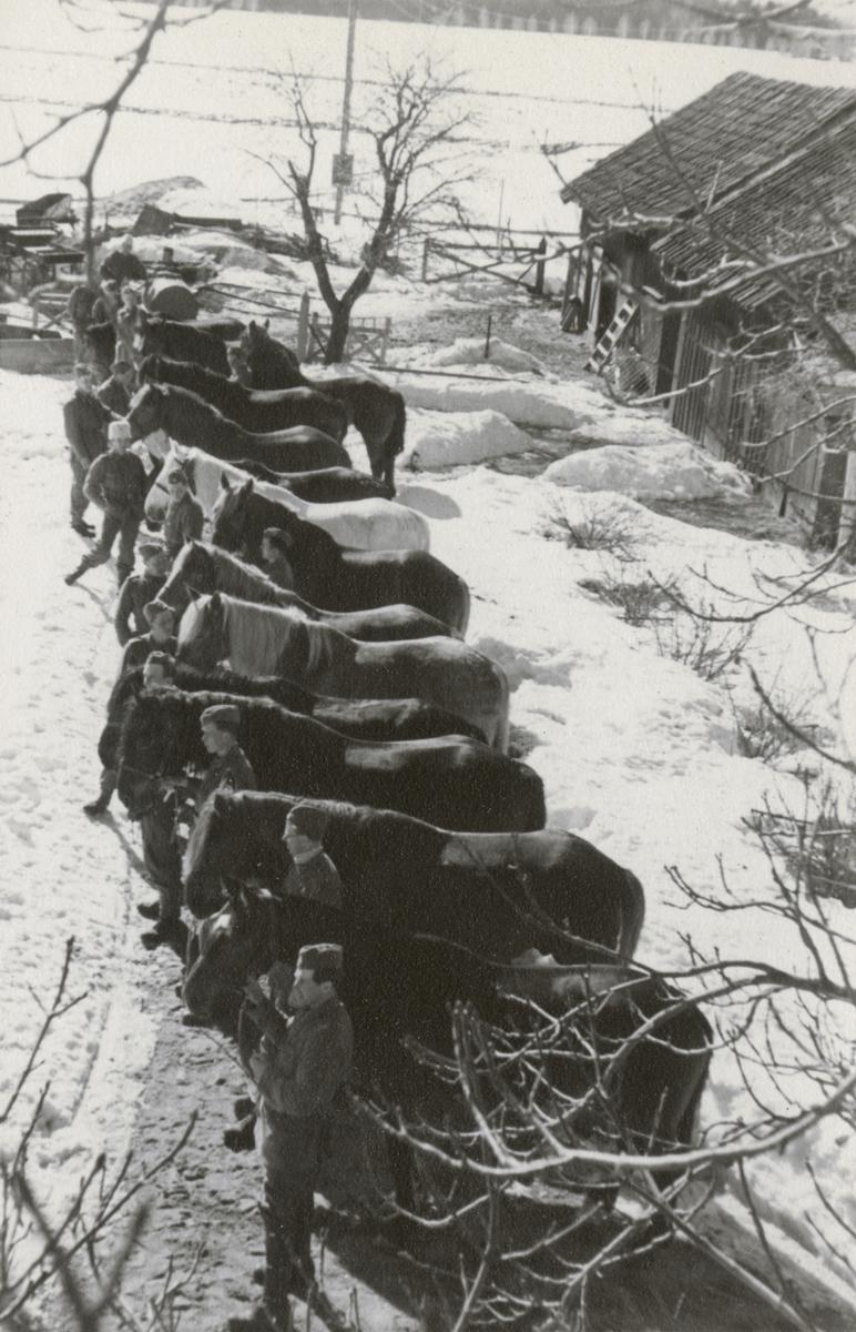 Hästarnas hälsokontroll hos Södermanlands regemente I 10.