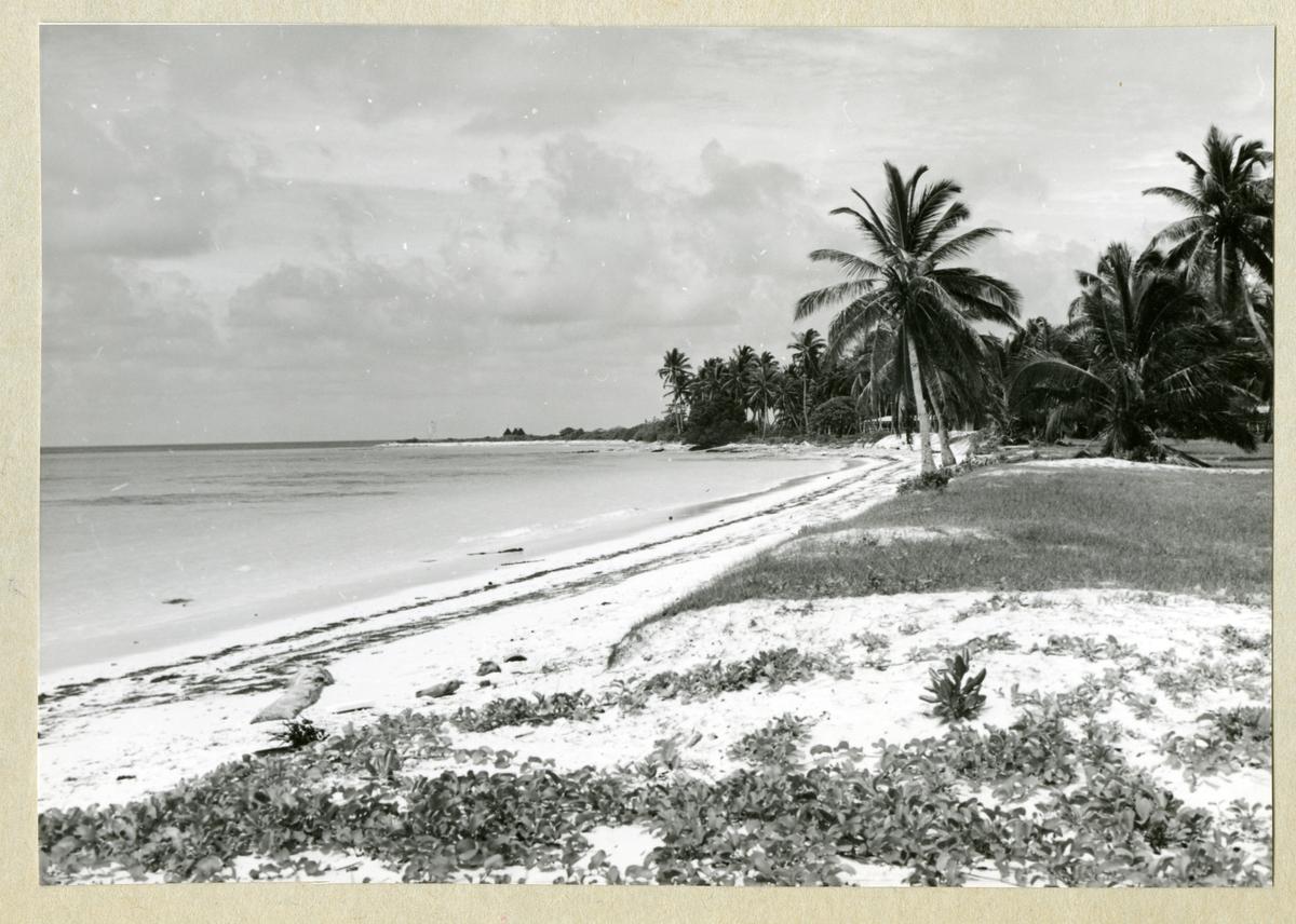 Bilden föreställer en sandstrand på Kokosöarna. Längs med stranden växer palmträd mot en något molnig himmel. Bilden är tagen under minfartyget Älvsnabbens långresa 1966-1967.