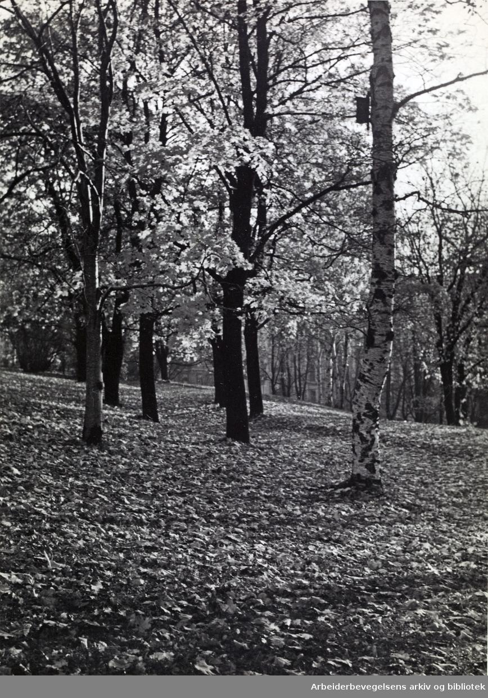 St. Hanshaugen, 1960-tallet.