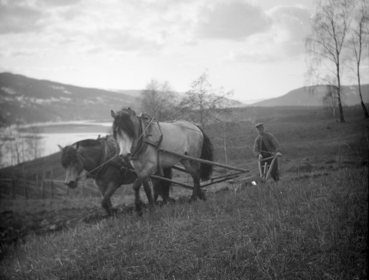 Pløying med to hester, antakelig på Skoug gård