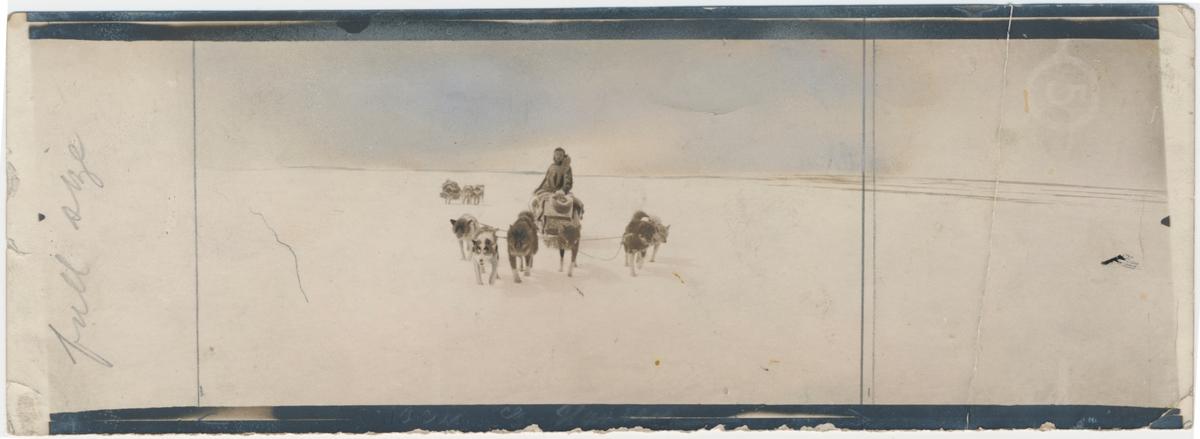 Godfred Hansen bak hundesleden ved Kong Haakon VII's kyst