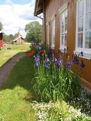 Iris ved Austun (Foto/Photo)