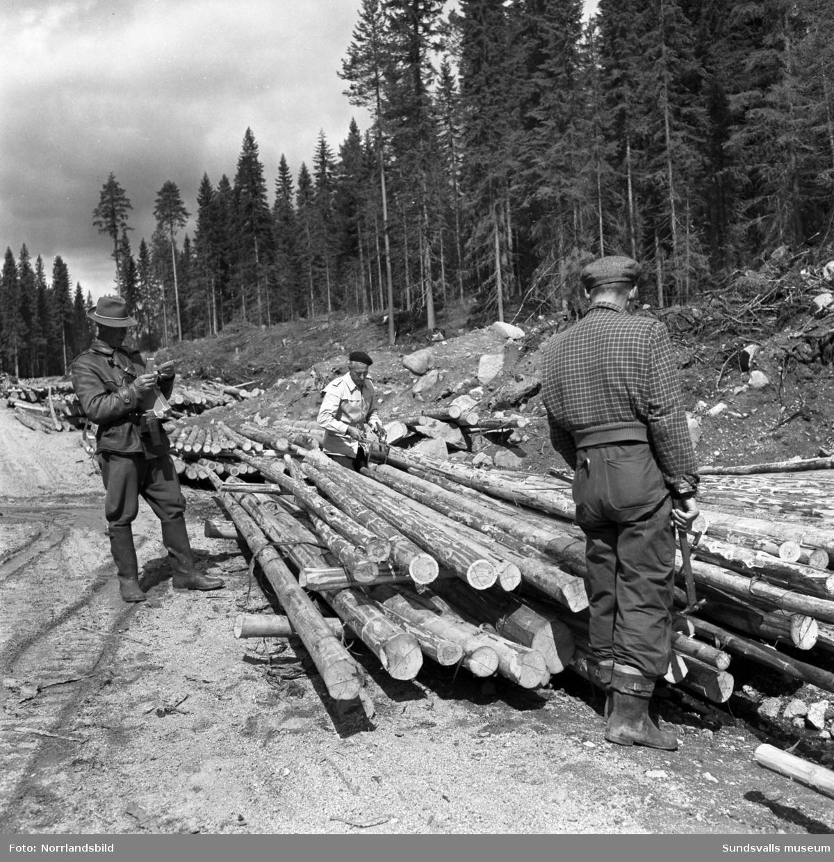 Tummning - mätning och märkning - av timmerstockar vid ett virkesupplag i skogen.
