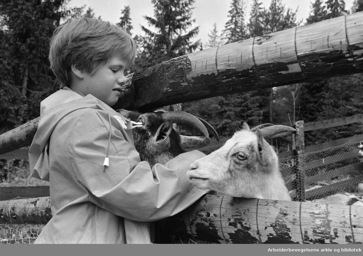 Mosseveien: Fornebo Dyrepark. Juli 1970