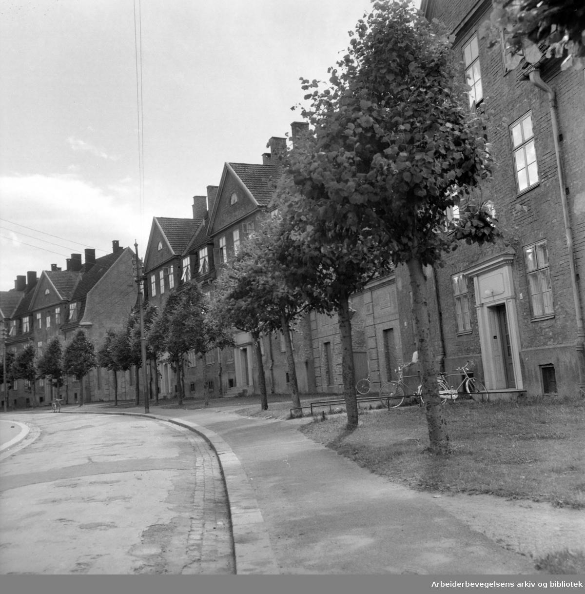 Lindern kompleksene.August 1959
