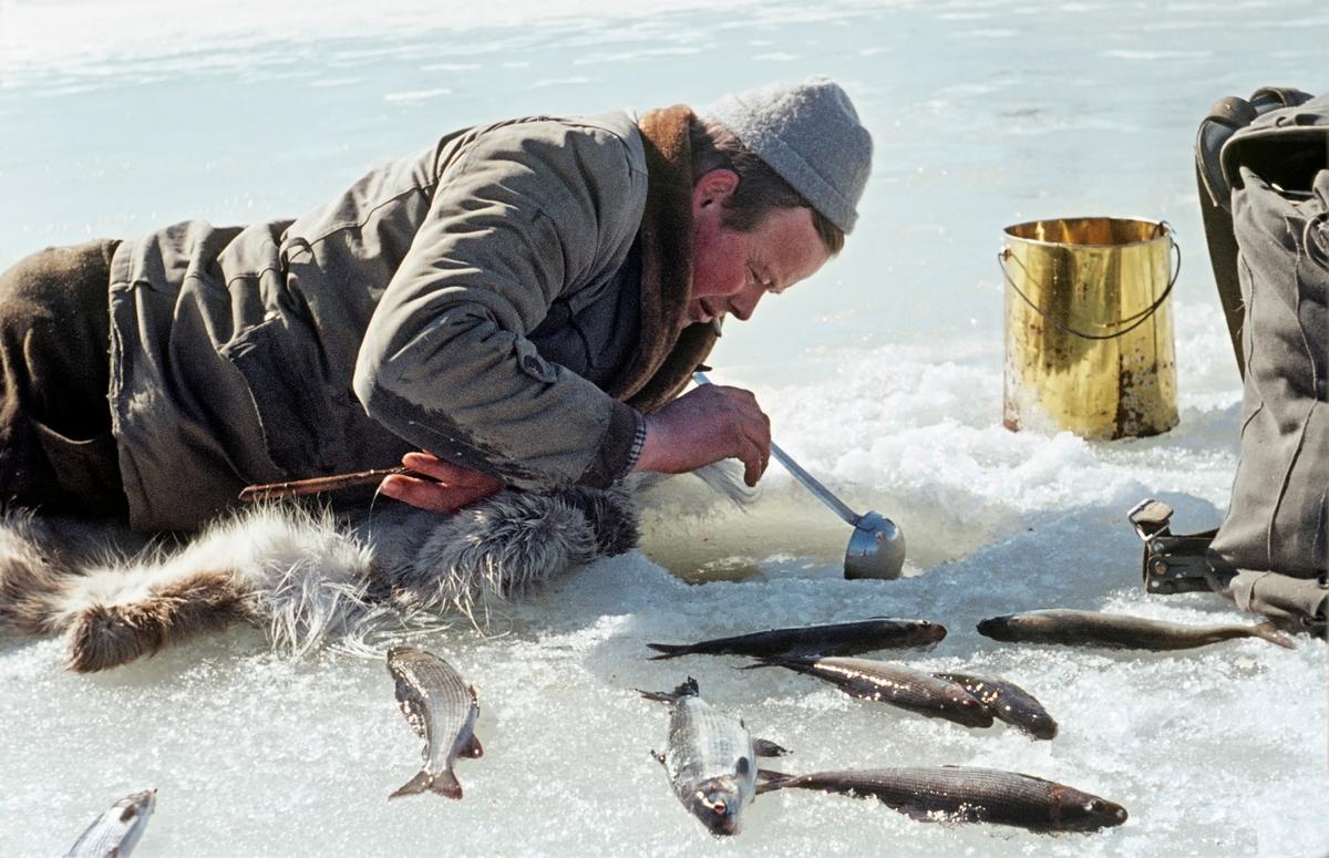 Magnar Næsbak (1932-2001), fotografert under grindalsfluefiske på Glomma-isen i 1963.  Fiskeren lå på magen på et skinn med ansiktet over et hull, der han slapp ned grindalsfluelarver som skulle trekke til seg fisk.  Dette «åtet» hadde han båret med seg i en issørpeløsning i et blikkspann (til høyre) i bildet.  Larvene ble «matet» ned i hullet i isen ved hjelp av ei kjøkkenause.  Det egentlige fiskeredskapet, en pinne med en senestubb med krok eller en messingtråd med renneløkke, holdt fiskeren under brystet mens han tilførte mer åte.  Grindalsflue er et lokalnavn på en steinflueart.  Den finnes i hele Norge, men er mest vanlig i Glomma på strekningen mellom Røros og Elverum. Lokalnavnet refererer til garden Grindalen i Elverum, som ligger like ved en elvestrekning der det brukte å forekomme store mengder av denne arten, som på latin kalles Capnia pygmea.  Grindalsflua legger egg i så vel småbekker som større elver, men i Elverum er forekommer den stort sett i Glomma. Larvene utvikles best der elvebotnen består av steinblandet sand.  Når det går mot vår søker larvene i store mengder opp gjennom sprekker i isen, hvor de utvikler seg til fluer med små, grå vinger.  Fiskerne samler disse insektene mens de ennå er i lymfestadiet.  Fiskemetoden var spesiell.  Først lagde fiskeren et romslig hull i isen ved hjelp av en isbil.  Deretter slapp en en del grindalsfluelymfer ned i hullet, noe som gjorde at sik og harr trakk mot vannet under hullet for å beite.  Fiskerne lå på magen på en trelem, litt bar eller en gammel skinnfell og kikket ned på fisken.  I den ene handa hadde de en liten pinne med en senestubb og en krok i ytterenden, eventuelt en tynn messingtråd med ei renneløkke, som kunne brukes til å snarefange mett og doven fisk.  På steder der det var strøm i elva brukte fiskerne to hull i isen - et øvre hvor grindalsfluelarvene ble sluppet og et nedre der fisken ble fanget.  Da dette fotografiet ble tatt lå fiskeren på magen med ansiktet over hullet i isen, slik at ha