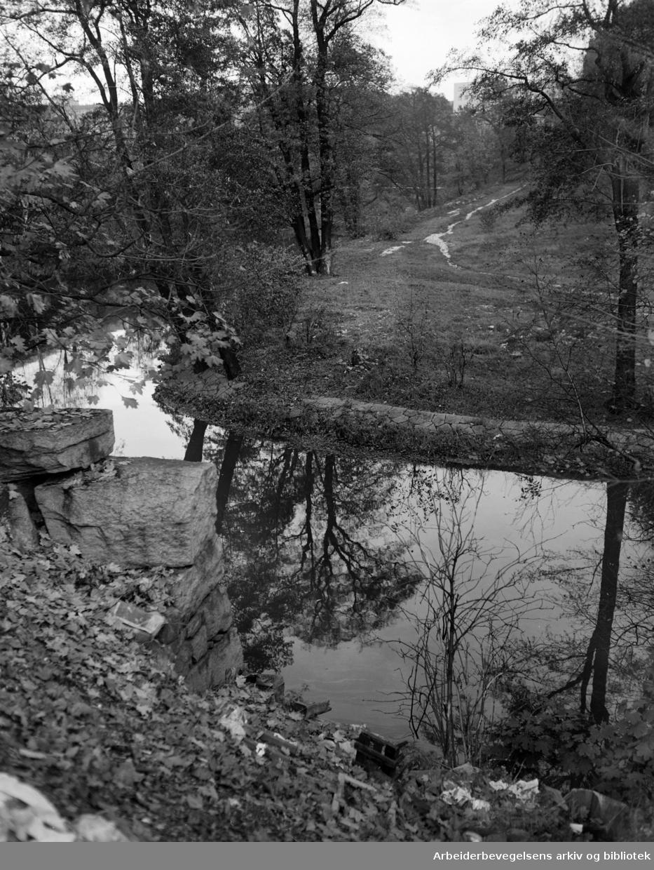 Akerselva. Seildugsdammen. Oktober 1955.