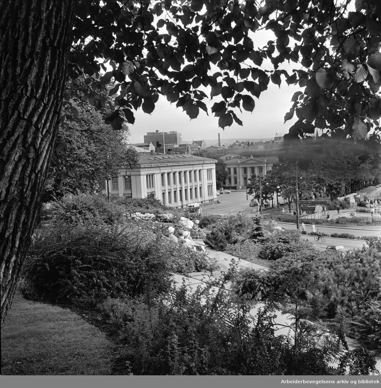 Abelhaugen. Utsikt fra Abelhaugen. Juli 1961