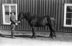Et militært befal (løytnant) og en hest foran en husvegg. Sa