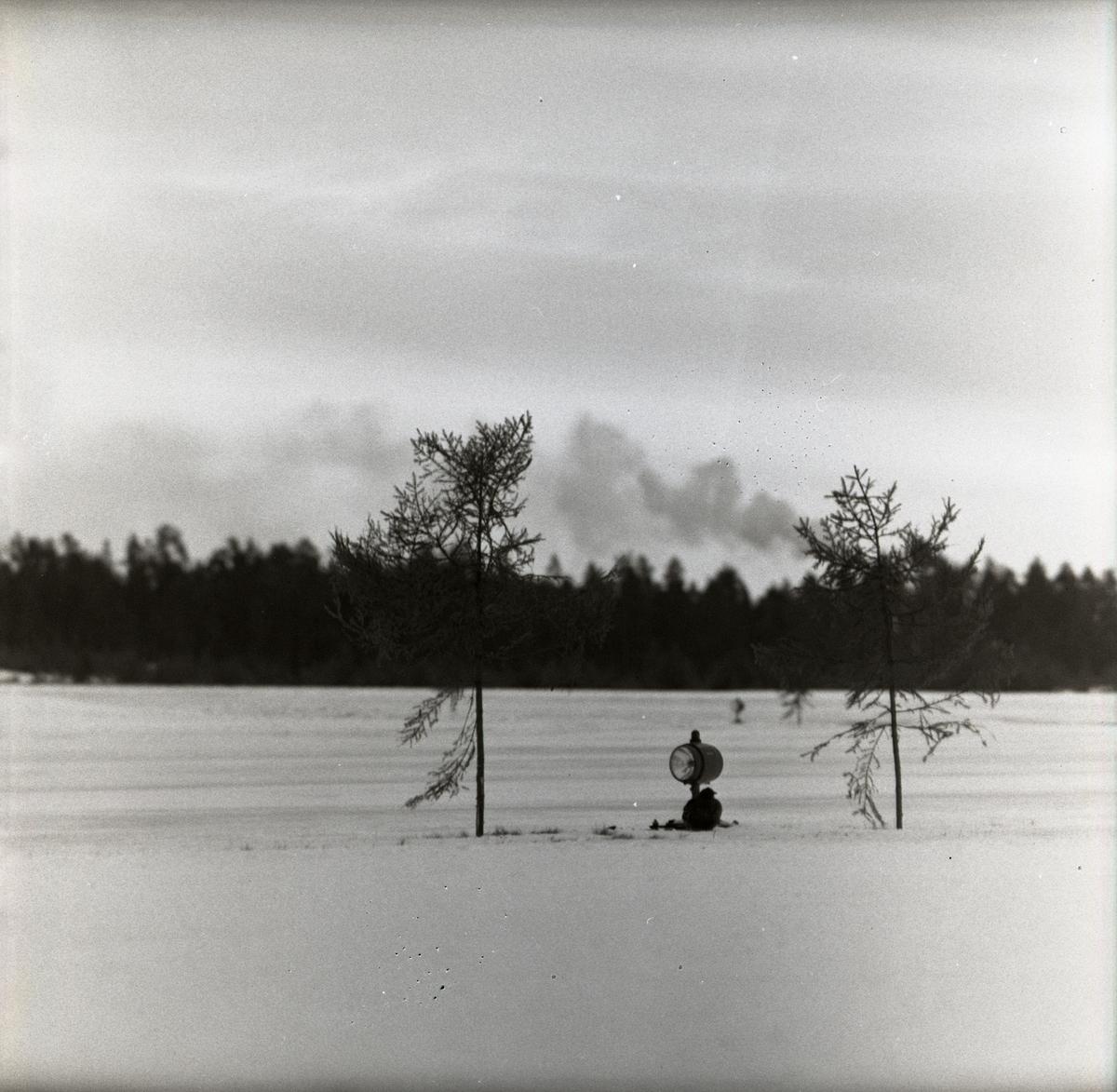 En orre sittandes vid en strålkastare mellan två träd vid F15 i Söderhamn den 4 februari 1957.