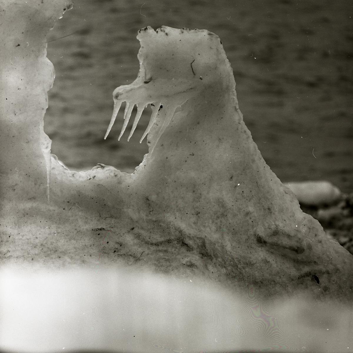 En snöformation som liknar en valross i Kivik, mars 1963.