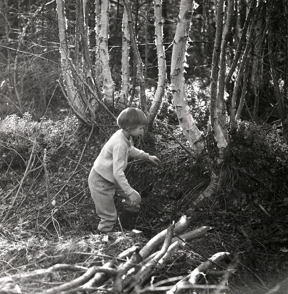 Ett flicka står bland björkar och ris i Hertsjö, maj 1963.