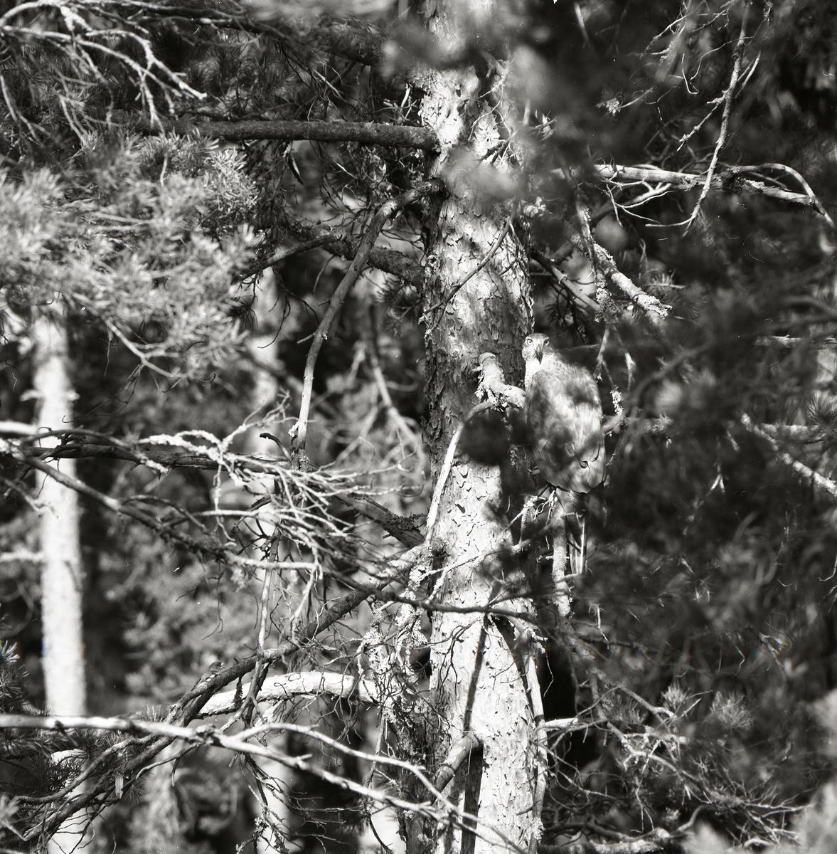 En fågel sitter på en gren högt upp i ett träd.