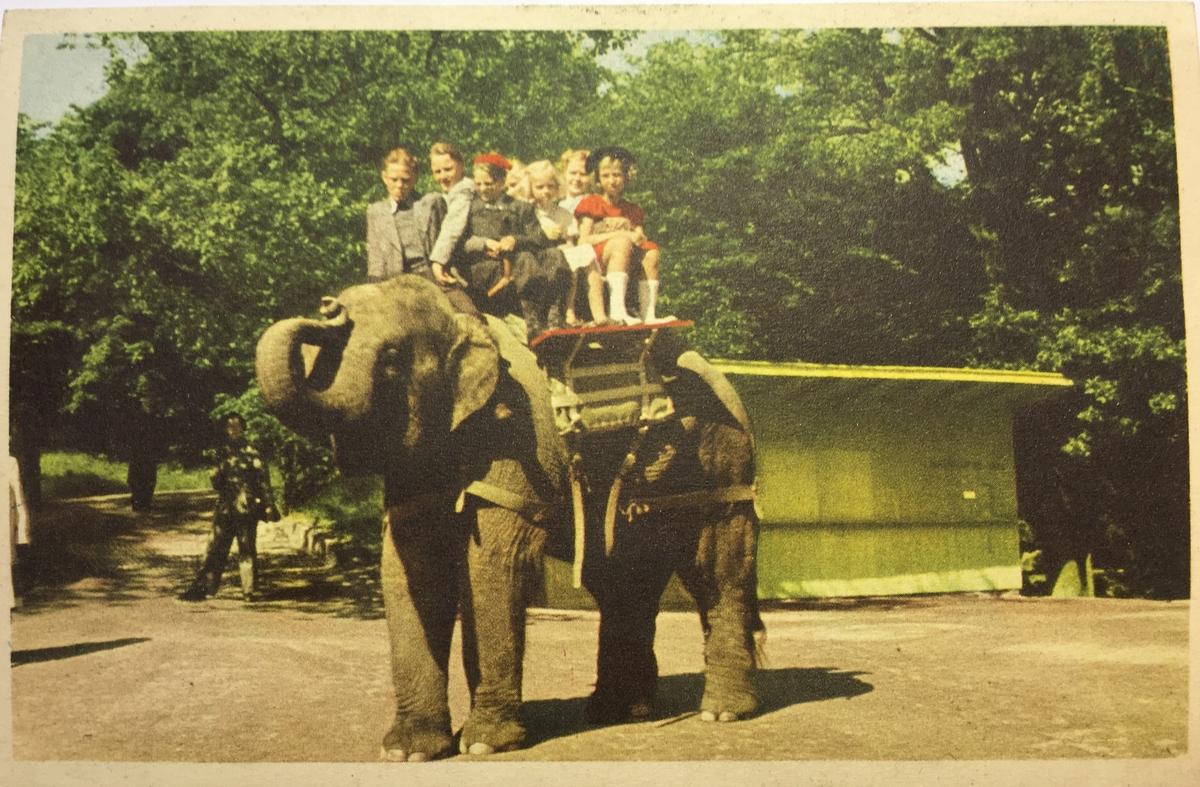 Vykort från Skansens. Barn som rider på elefanten Bambina.