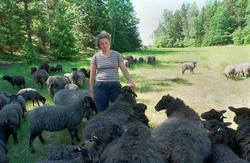 Jordbrukare Lill Schierman med får som betar på olika öar i