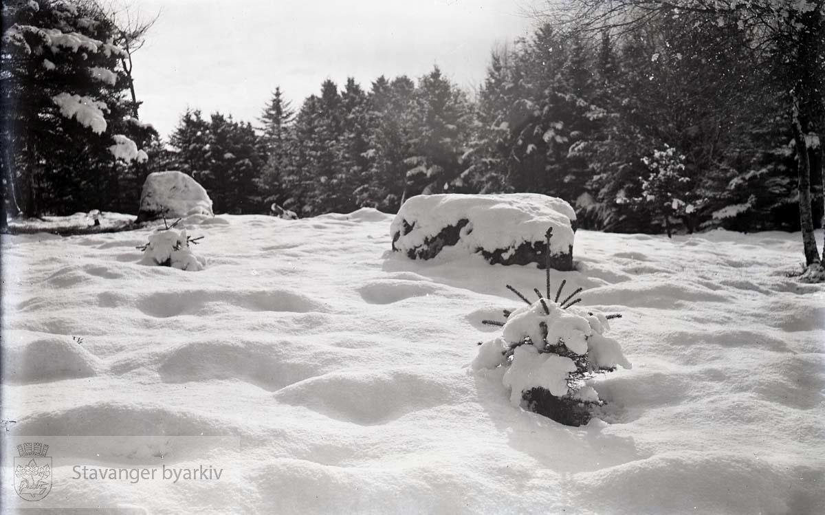 Snødekt landskap