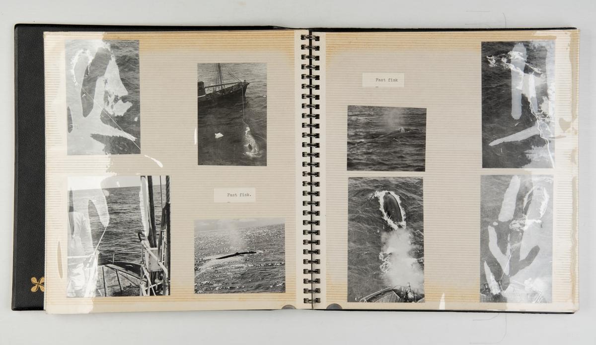 Upaginert fotoalbum med bilder fra hvalfangst med Ross. Avbildede fartøy: Star III (hvalbåt) / Star IV (hvalbåt) / Star V (hvalbåt) / Star VI (hvalbåt) og Sir James Clack Ross av Sandefjord.