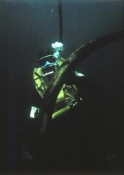 Dykker med ene elefanttann under utgravingen av slaveskipet