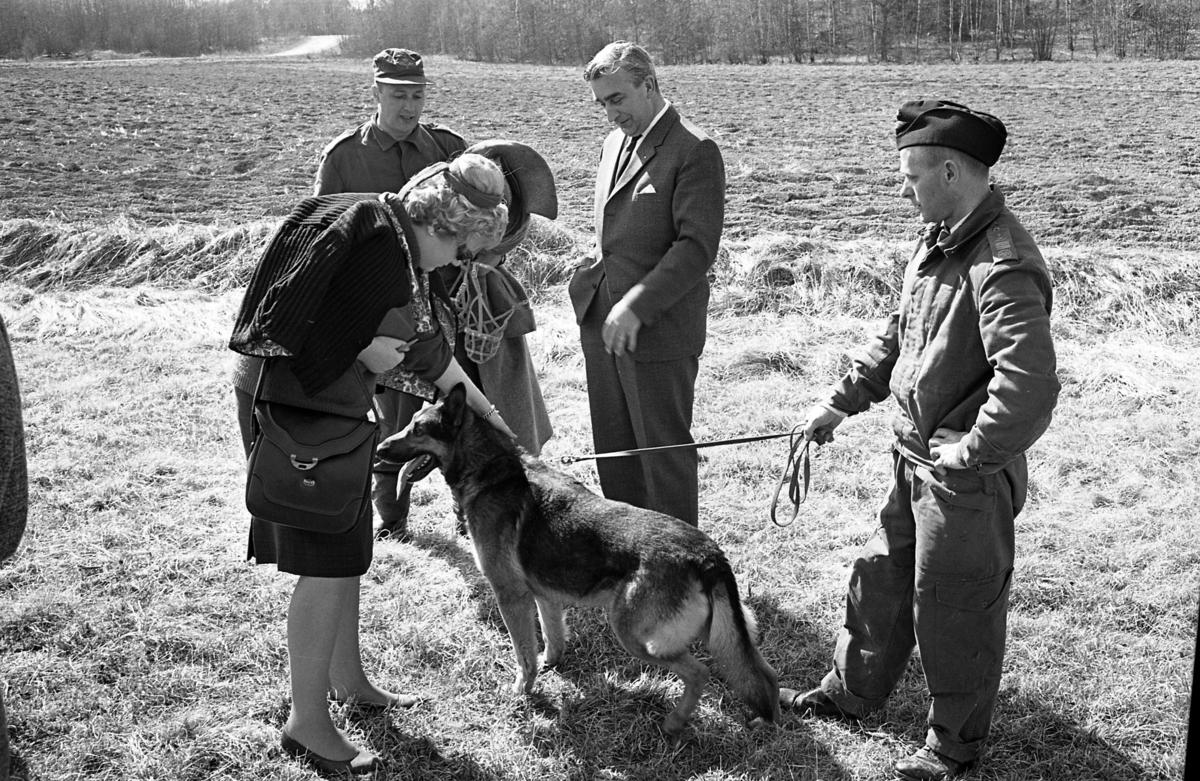 Fältpoliser övar vid Centrala Verkstäderna Arboga. Polis med schäfer i koppel. En kvinna klappar hunden. Bredvid står Anders Högfeldt. CVA