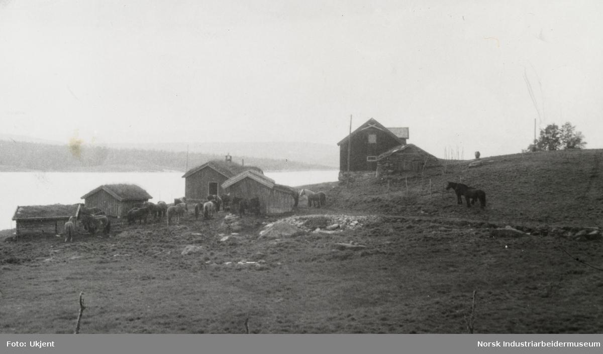 Hester beiter på tunet til gårdsbebyggelse på Sundet, Møsstrond. I bakgrunn sees innsjøen Møsvatn