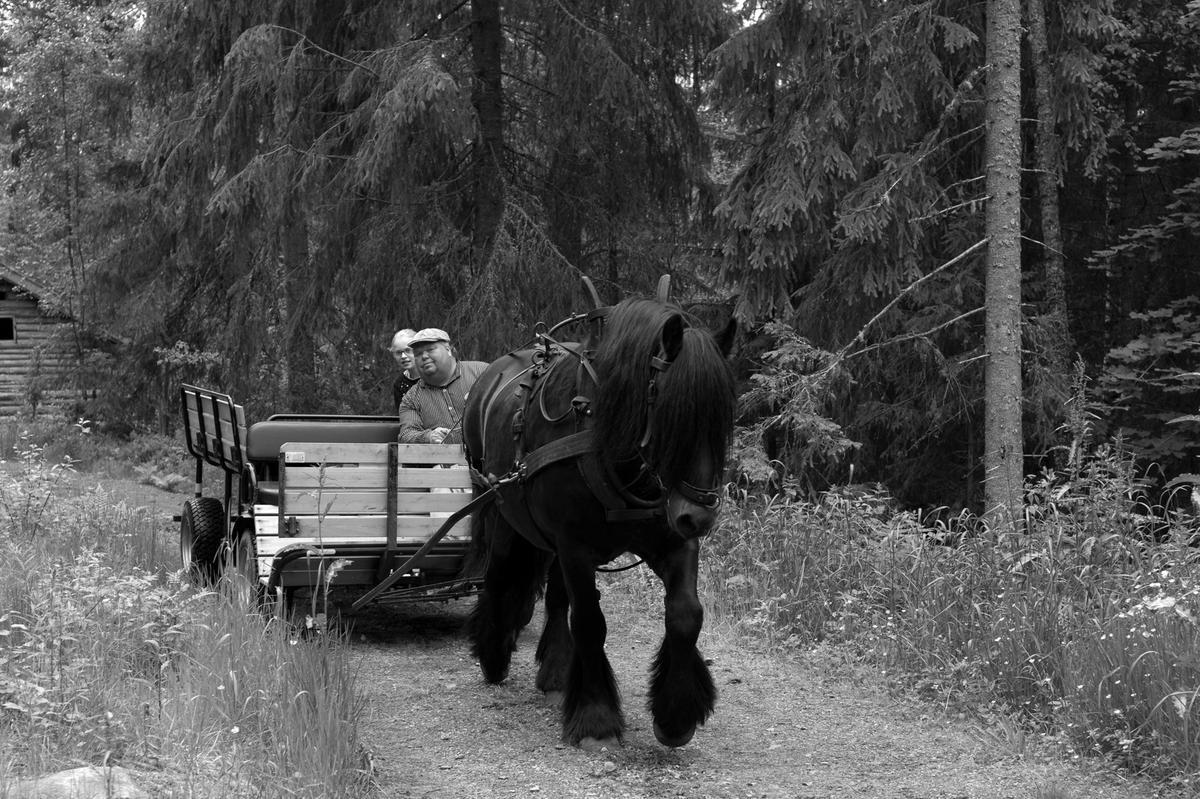 Hest og kjerre, Liv i stuene (Foto/Photo)