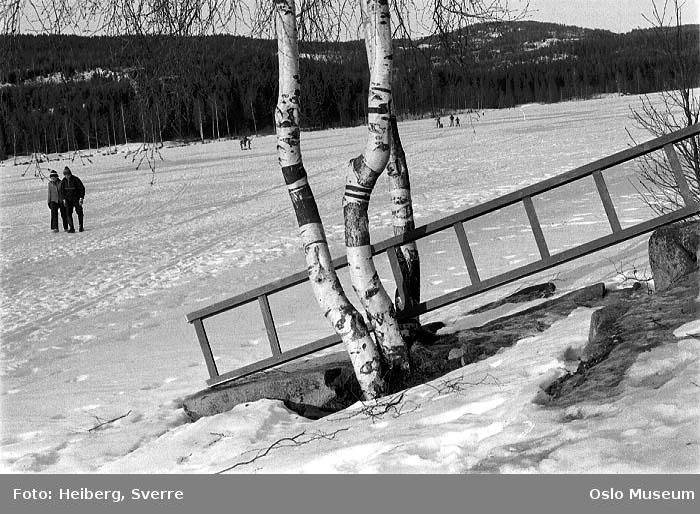 islagt vann, mennesker, tur, skog