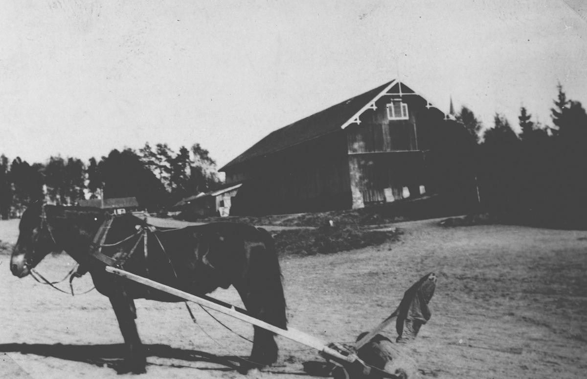 Hester med velter.Fotografert på Kjærnsmo. Låven i bakgrunn.
